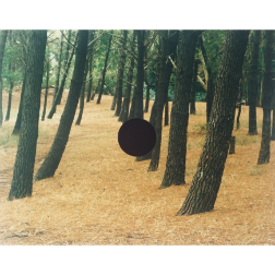 Bosque, 1997